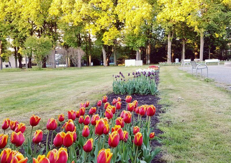 Kurpark nahe Goldene Traube